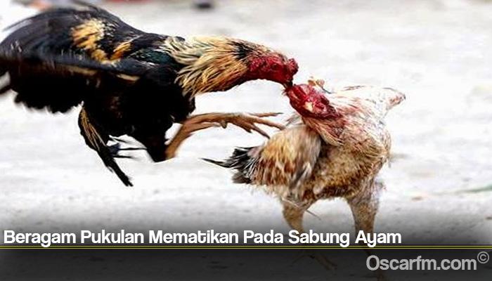 Beragam Pukulan Mematikan Pada Sabung Ayam