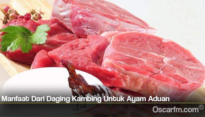 Manfaat Dari Daging Kambing Untuk Ayam Aduan