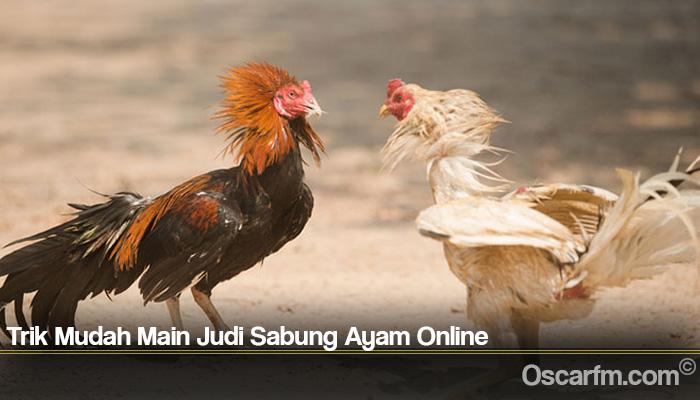Trik Mudah Main Judi Sabung Ayam Online